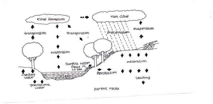 Agricultural science 2 novdec 2011 to draw an annotated diagram of the water cycle the expected answers include scan0001 ccuart Gallery