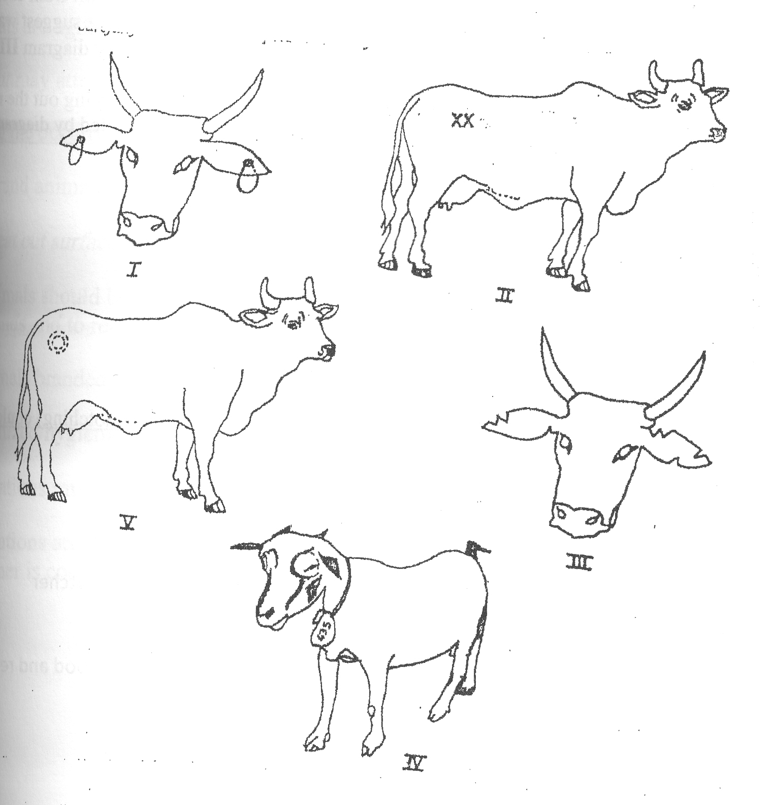 Agricultural science 3 novdec 2009 state the methods of identification illustrated by the diagrams ccuart Gallery