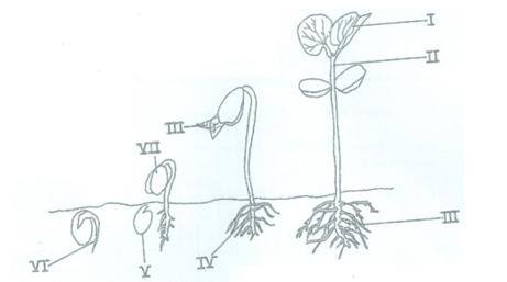 Biology Paper 3 Wassce Pc 2016