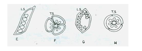 Biology Paper 3, Aug-Sept 2018
